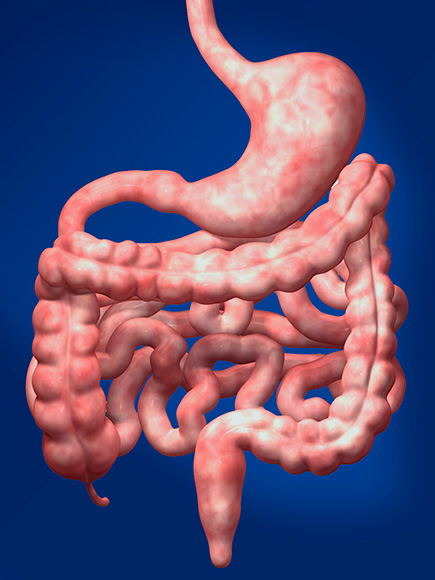 Gastric System Disorders