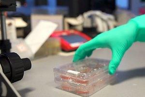 Samples in het lab in Leiden