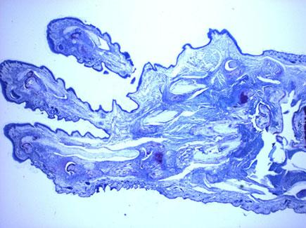 Imagen microscópica Inmunología