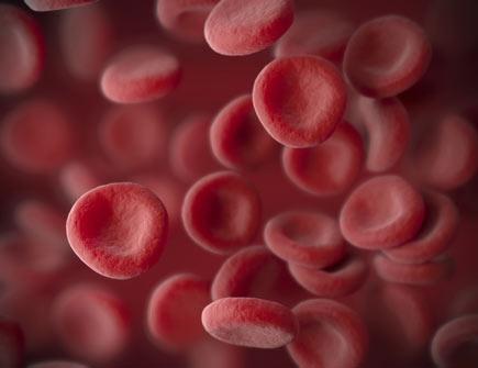 Krvna zrnca