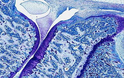 Immunology Research at Janssen EMEA