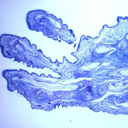 Microscope slide sample