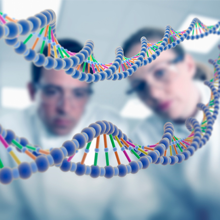 Research and development double helix